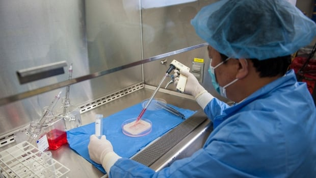 Dr. Yuanyuan Zhang of the Wake Forest Institute for Regenerative Medicine demonstrates the process to engineer a vaginal organ in a laboratory. Scientists report in two separate studies they have made vaginas and part of the nose, providing more evidence that growing organs in the laboratory is possible.