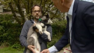 Vancouver West End puppy attacked by raccoon - 2