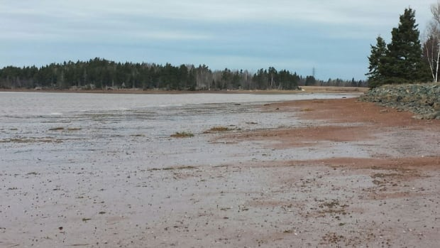 A body was found in a marshy area near the Hurry Road at the western end of Charlottetown.