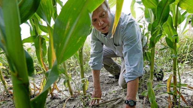 Environmentalist Craig Cox looks at a corn field near Ames, Iowa. A new study concludes that biofuels made with corn residue release 7 per cent more greenhouse gases in the early years compared with conventional gasoline.