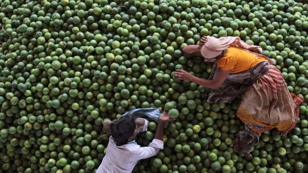 Workers rest on a pile of lime at a wholesale fruit market in India. Canadians tend to pay a premium for limes, which are generally unit-priced at a few for a dollar, but now some stores are selling limes for well over a dollar.