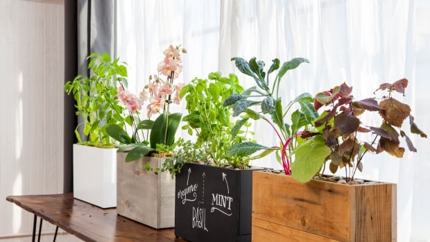 Modern Sprout planters come in four different finishes.