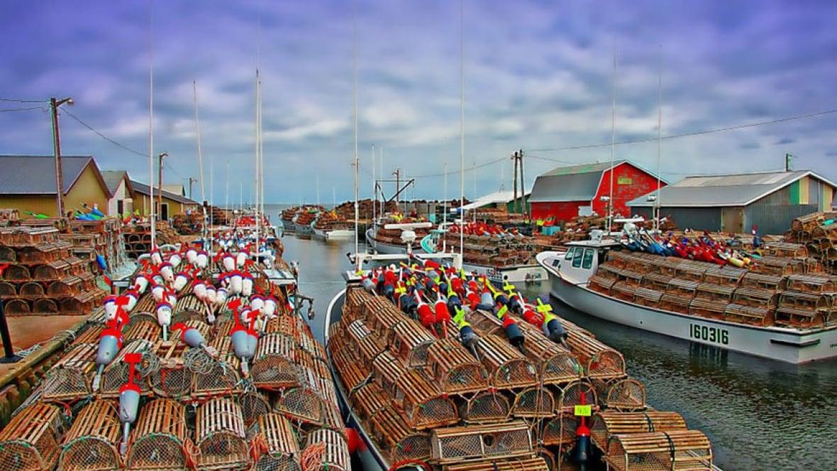 Nova Scotia lobster fisheries shut down, some tied up in P.E.I. - Nova Scotia - CBC News