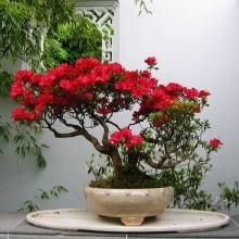Penjing at the Dr. Sun Yat-Sen Gardens