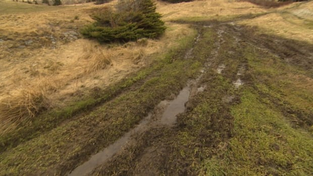 The Town of Torbay will be working to keep ATVs off the hillside near Torbay Beach, and hopes to develop a green park space in the area.