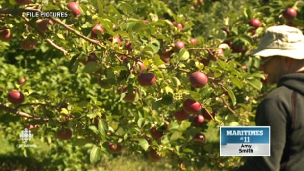 Apple growers welcomed the move.