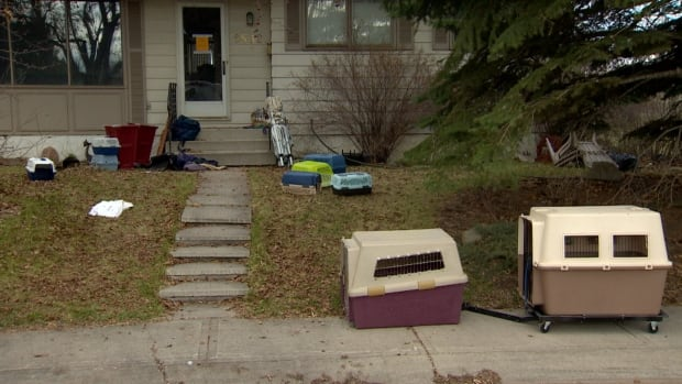 Calgary Humane Society officials removed about 30 dogs from breeder Beverly Creed's house in Acadia last week.