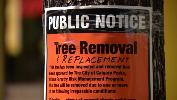 53 dying trees along Stephen Avenue mall in downtown Calgary are being removed and replaced with hardier varieties.