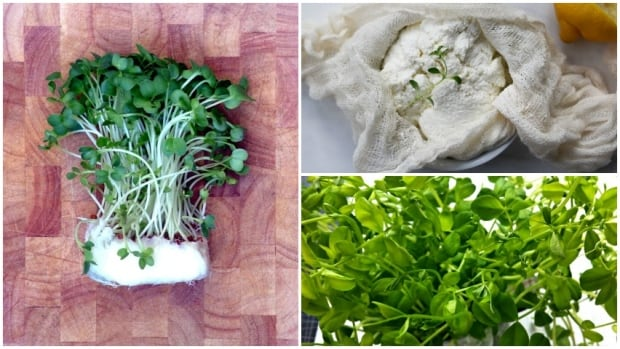 From growing herbs to making your own ricotta, there are many ways to make it feel more like spring in Calgary.