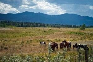 Alta Wild Horses 20110825