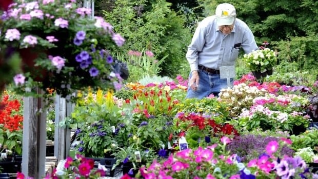 Victoria Day weekend usually marks the beginning of the gardening season for many Quebecers.