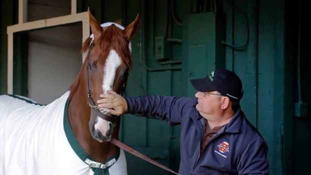 Assistant trainer Alan Sherman rubs Kentucky Derby and Preakness Stakes winner California Chrome's nose during a walk at Pimlico Race Course in Baltimore on Monday.