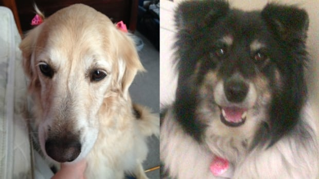Phoebe, left, and Max died this week after eating a sausage laced with anti-freeze that was in their backyard.