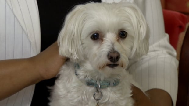 Some pet owners are willing to spend big bucks to keep their four-footed friends well looked after.