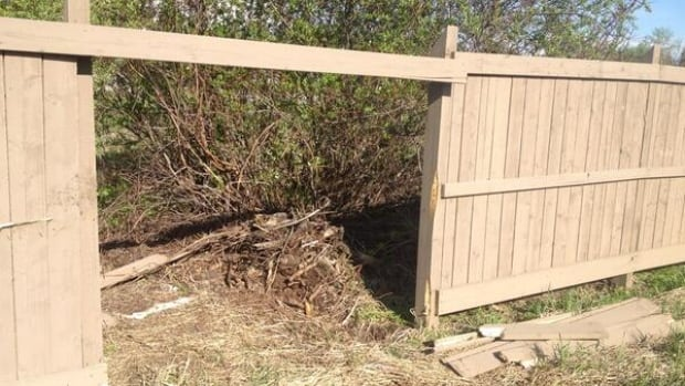The truck crashed through this fence in Sherwood Park before speeding away from the scene.
