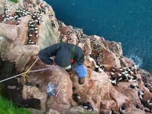High Arctic seabird research