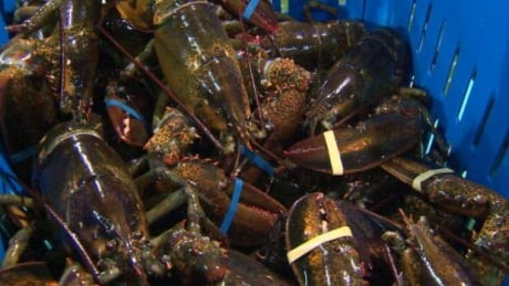 Nova Scotia Lobster Fisheries Shut Down Some Tied Up In P