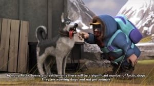 Don't pet the dogs