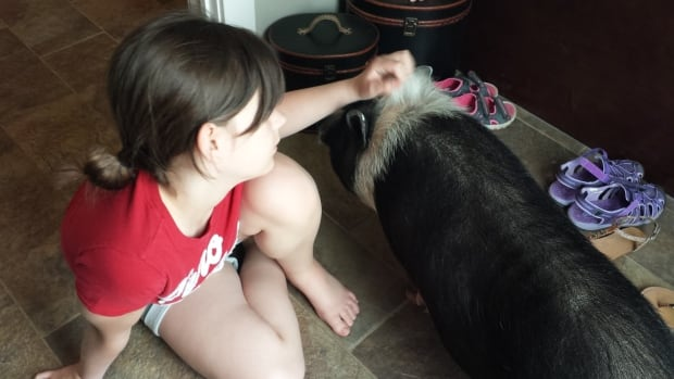 The family of Eli the pot-bellied pig is hoping the county will make an exception to its bylaw forbidding livestock from living in residential areas.