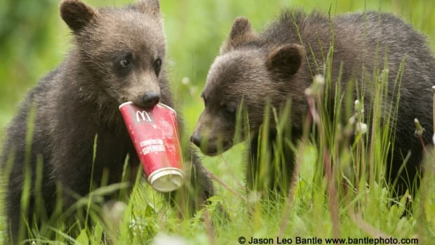 Jason Leo Bantle says he has often seen the cubs chewing on litter.
