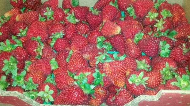 Strawberry Festival takes place this weekend.