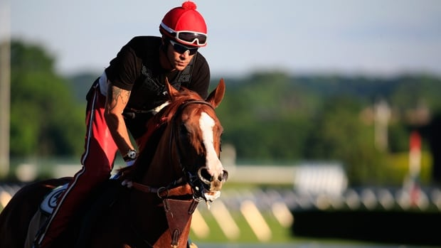California Chrome trains Friday with exercise rider Willie Delgado ahead of the Belmont Stakes at Belmont Park in Elmont, N.Y.