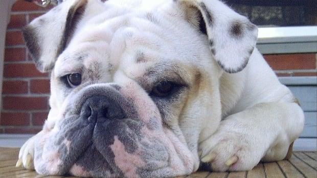 Deadly Dog Treats Costco