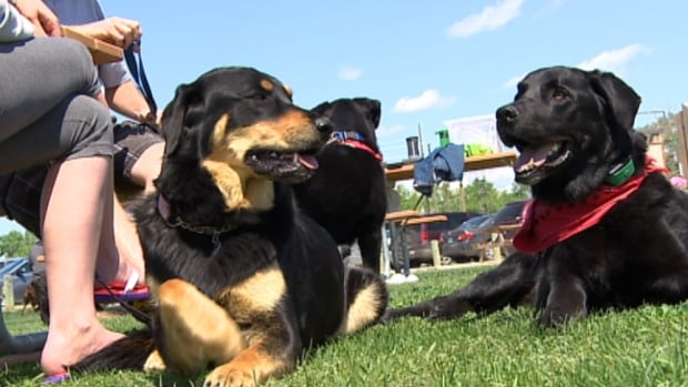 The first Winnipeg Dog Fest took place at Kilcona Park Saturday.