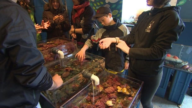 The Petty Harbour Mini-Aquarium tries to offer hands on exhibits for youth to engage them in marine sciences.
