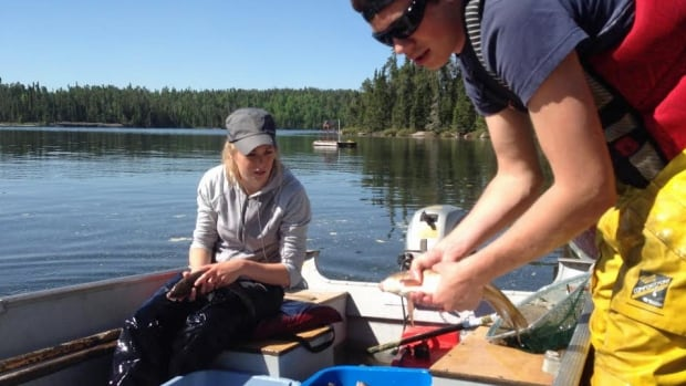 Researchers bring back a catch of trout from Lake 626 in the Experimental Lakes Area of northwestern Ontario to be studied. They will be looking at how climate change is affecting the fish.