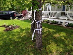 Moncton ribbons