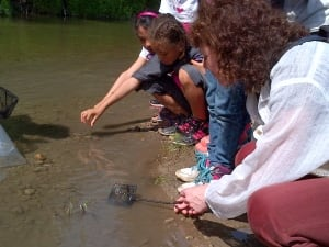 Students release salmon into a Lake Ontario tributary