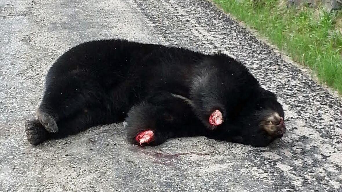 Black Bear Paw >> Dead bear with paws cut off found near Fort Frances - Thunder Bay - CBC News
