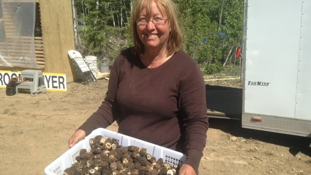 Morel buyer Lorna Janas holds a tray of the mushrooms earlier this summer near Carmacks, Yukon. Yukon officials estimate 500,000 pounds of morel mushrooms were exported from the territory this summer.
