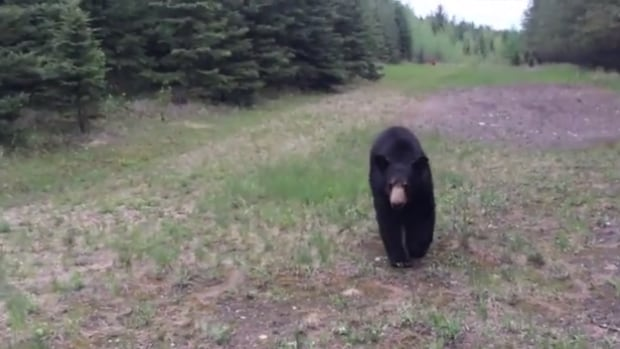It's a workout that two joggers near Fort McMurray will never forget after a black bear followed the pair for several minutes.