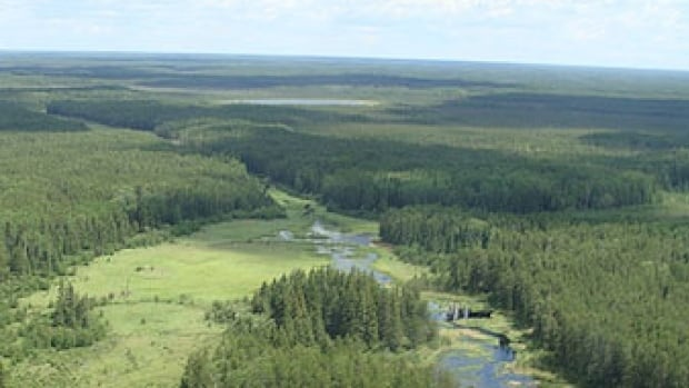 Manitoba's boreal forest supports a breeding season population of 10-12 million waterfowl and many wetland-dependent wildlife, including the threatened woodland caribou.