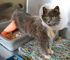 Hobbs the cat was abandoned and soon up for adoption
