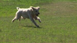 africville dog park