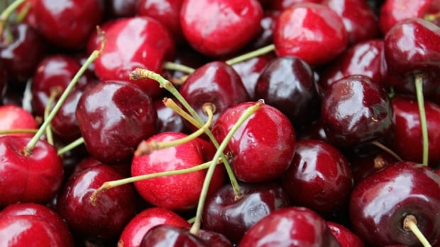 The new Canada-China trade deal means B.C. growers will be able to sell more cherries to China.