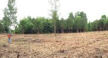 kanata clear cut tree massacre