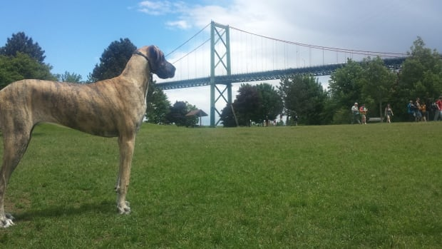 If Halifax city council votes to decommission the off-leash dog area at Africville Park, Ninja will have to find a new place to play.