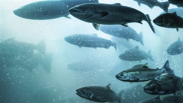 Conservationist and angler Donald Hustins said, like the rest of Atlantic Canada, Newfoundland and Labrador salmon stocks are at an all-time low.