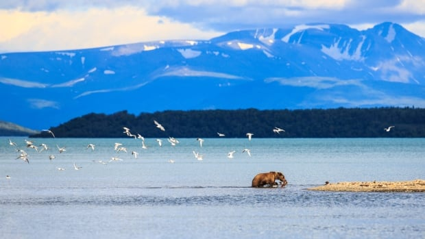 Katmai National Park and Preserve is roughly the size of Wales. A search for Francois Guenot was called off late Saturday, a day after park rangers found his kayak containing his identification, food, maps and personal journals.