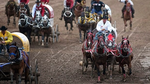 A chuckwagon driver brings his team across the finish line at the Calgary Stampede in 2010.