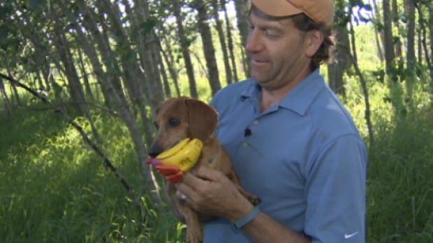 Kevin Ball holds his miniature dachshund Hudson. The dog was caught in a trap set for a beaver back in May.