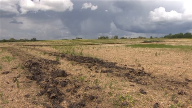 Muddy fields in southeast Saskatchewan have made it difficult for some farmers to complete seeding.