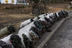Kenya Environmental Crime