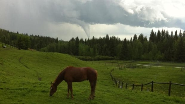 A horse grazes placidly despite tornado off in the distance.