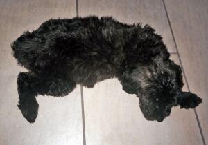 bc-140627-caspar-stickly-puppyjpg