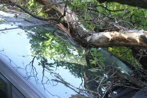Tree lands on car
